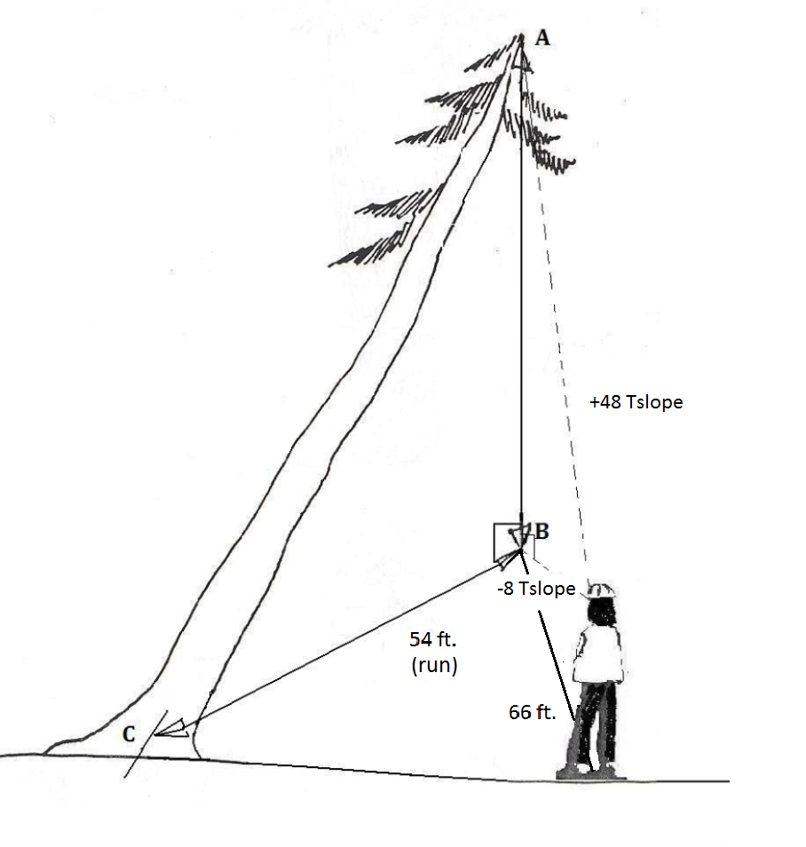 a leaning tree. at a horizontal distance of 66 ft, reading to top is +48 Tslope; reading to the top's fall line is -8 Tslope. Horizontal distance from stump to fall line is 54 ft.
