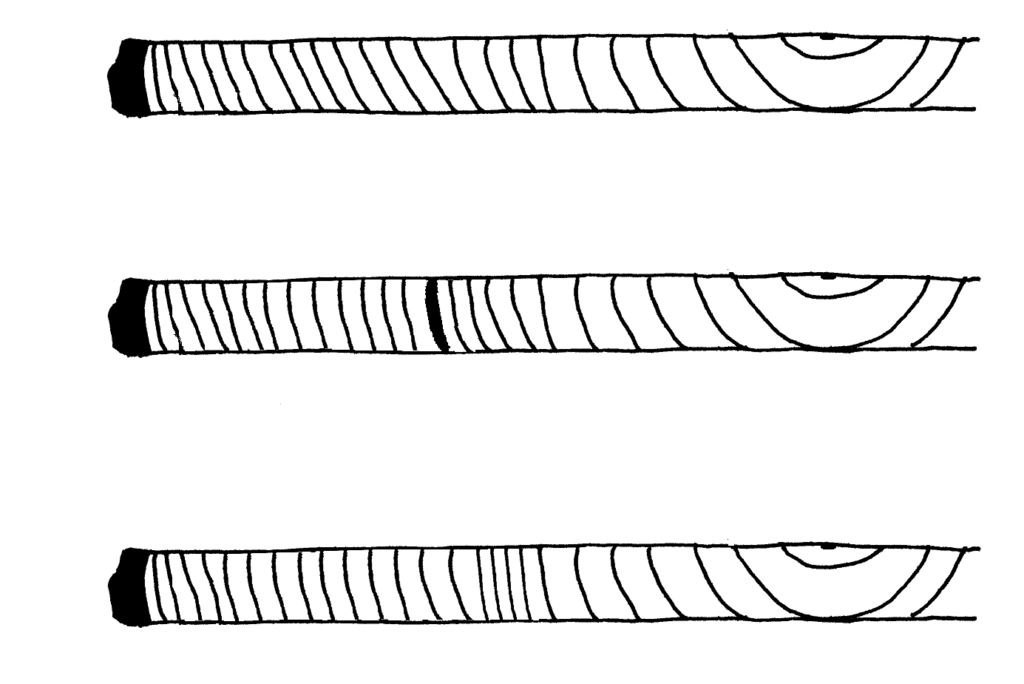 Top core sample shows even annual rings. Middle core sample shows a black growth ring halfway to the center. Bottom core sample shows tight growth rings halfway to the center.