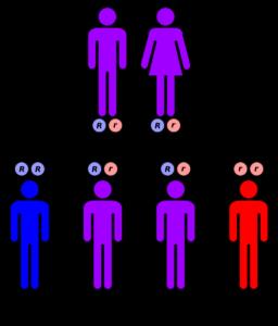 hereditary mutation