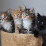 Kittens of various colors.