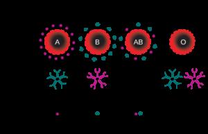 13.ABO_blood_type