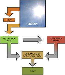 energy through organisms