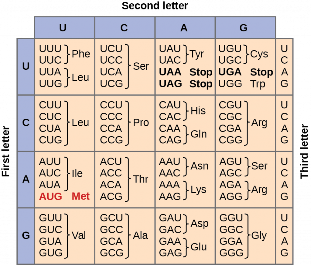 Mrna Codon Table
