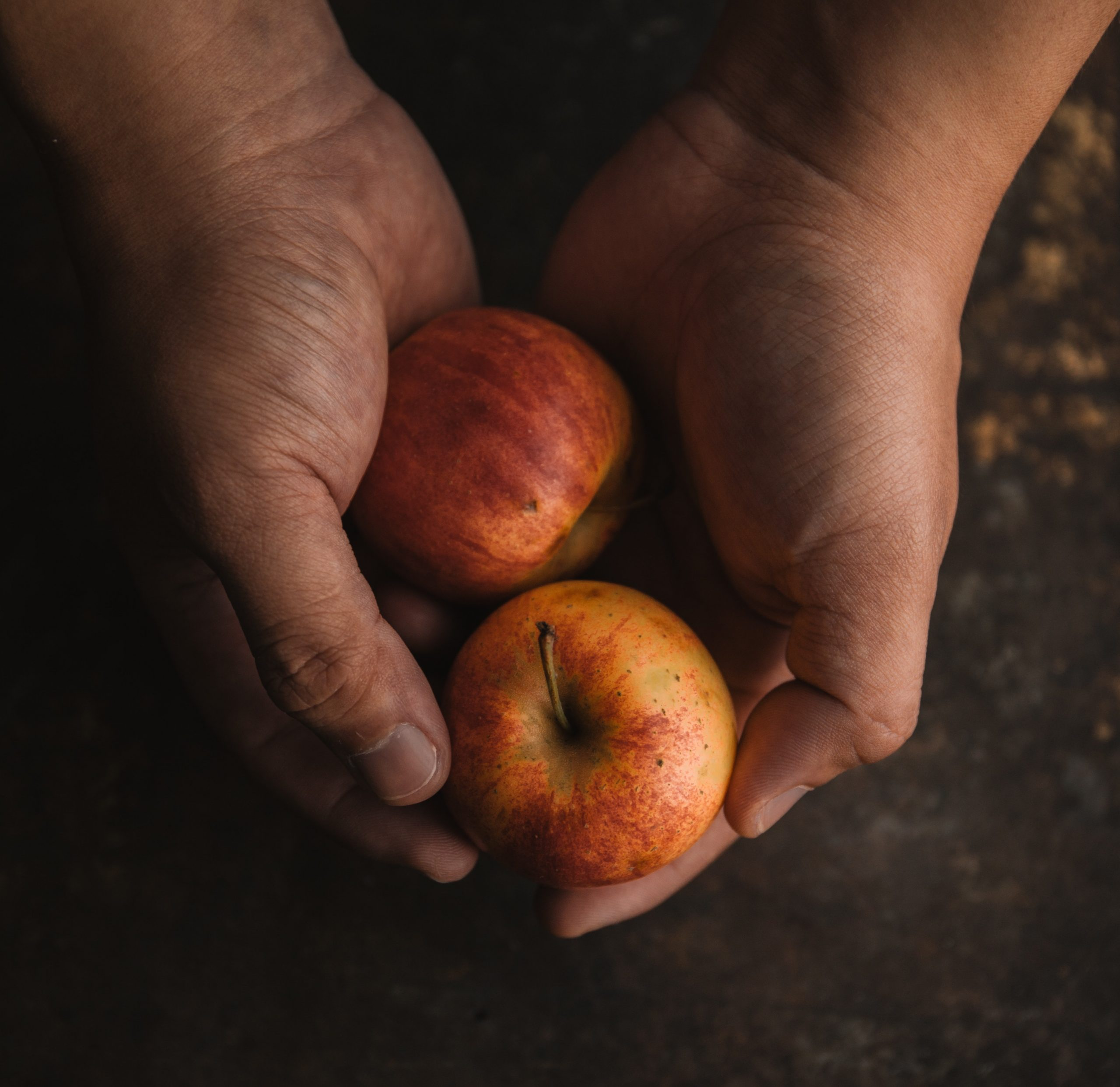 2 hands, brown with dirt, hold a single apple