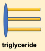 The structure of a triglyceride is often depicted as a simplified drawing of the glycerol backbone and three fatty acids. This drawing shows a simple vertically aligned oval with three horizontal rectangles attached to the right side of the oval.