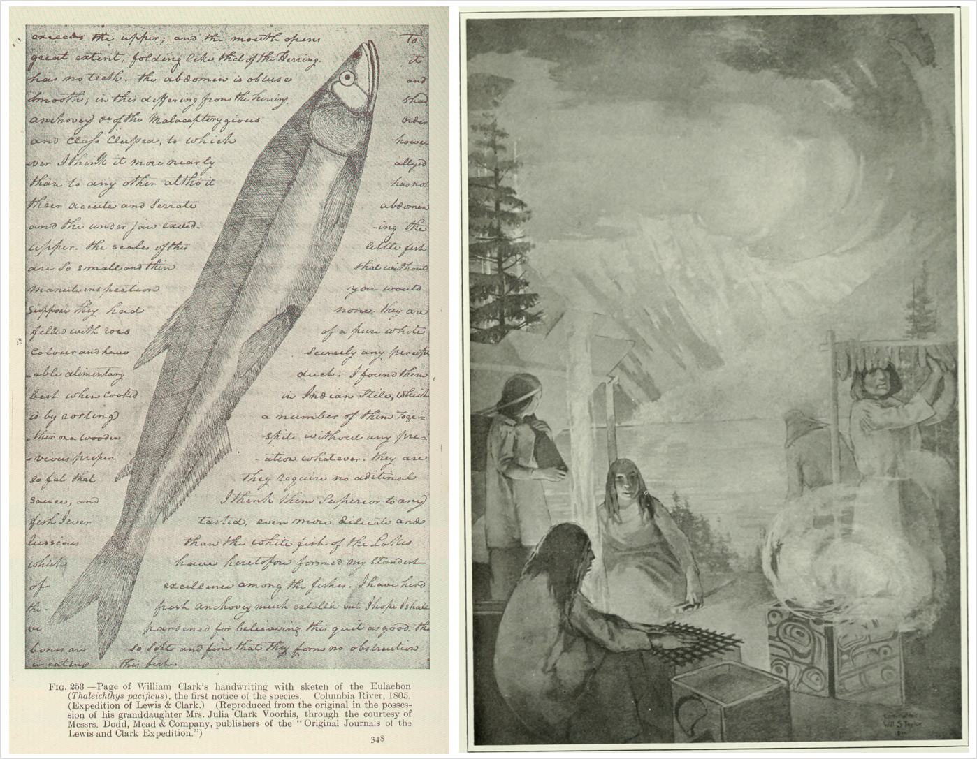 At left is a page from William Clark's journal, showing his handwritten entry and a large sketch, which appears to be made in pencil, of a eulachon smelt stretching diagonally across the page. At right, a black-and-white drawing or etching of a Tsimshian family making eulachon butter, showing family members working together on the bank of a river with tall trees and mountains framing the image.