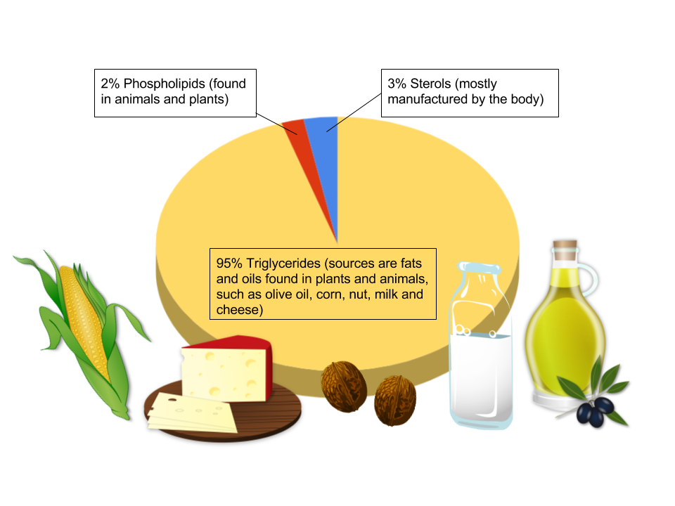 A pie chart showing that approximately 95% of dietary fats are in the form of triglycerides, 3% are in the form of sterols, and 2% are in the form of phospholipids.