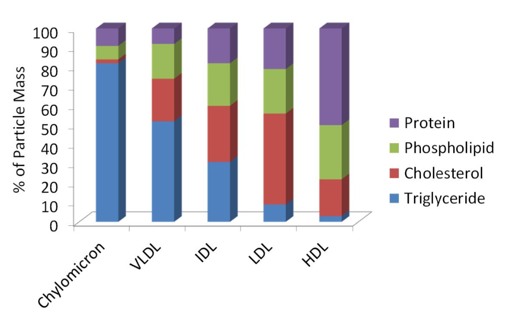 A bar graph compares the composition of different types of lipoproteins. From left to right, it shows that chylomicrons are dominated by triglycerides, and the percent of particle mass made up of triglycerides further decreases in this order: VLDL, IDL, LDL, and HDL. As the percent of particle mass from triglycerides decreases, the proportion of cholesterol, phospholipids, and protein increases.
