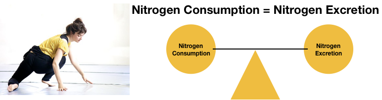 Nitrogen balance is illustrated by a balance scale being equally balanced by nitrogen consumption and excretion. A healthy women exercising is also pictured.
