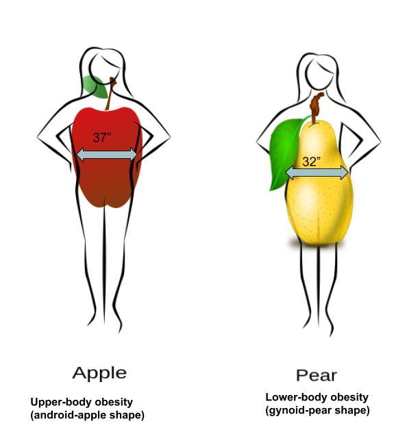 This is a pencil sketch of two different women. One with an apple overlay (illustrating that she stores fat more centrally), and another with a pear overlay (illustrating that she stores fat more in the hips and thighs).