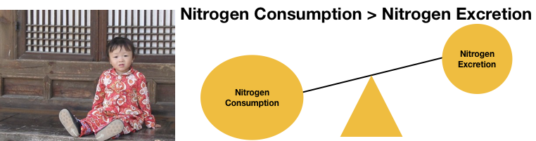 Positive nitrogen balance as illustrated here with a balance scale is when consumption outweighs excretion. This is also illustrated with a healthy young child from Seoul.