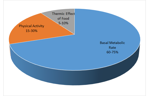 This is a pie chart representing the three components of energy expenditure. The largest part of the pie chart represents basal metabolism (60-75%). The next largest piece of this chart is physical activity (15-30%), and the smallest section of the graph is thermic effect of food (5-10%).