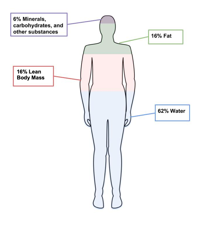 An outline of a human body horizontally divided into 4 parts: 62% water, 16% lean body mass, 16% fat, and 6% minerals and other substances.