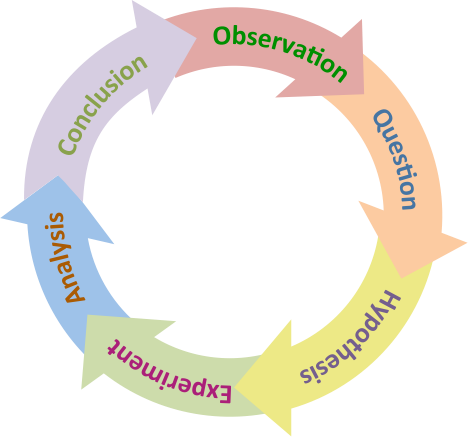This is a circle of arrows in different colors (because the scientific method is a cyclical process) illustrating the different parts of the scientific method: observation, question, hypothesis, experiment, analysis, and conclusion.