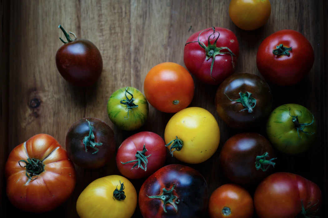 A photograph of a variety of tomatoes that are different colors (red, yellow, green and deep purple).