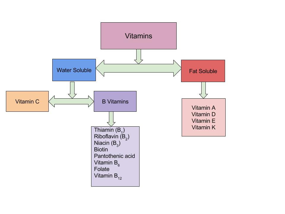 A flow chart depicting how vitamins are divided into the two categories of water-soluble and fat-soluble vitamins. Each category of vitamins lists the vitamins that fall in that category.