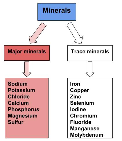 A flow chart shows how minerals are categorized as major minerals and trace minerals. The flow chart lists which minerals are major minerals and which minerals are trace minerals.