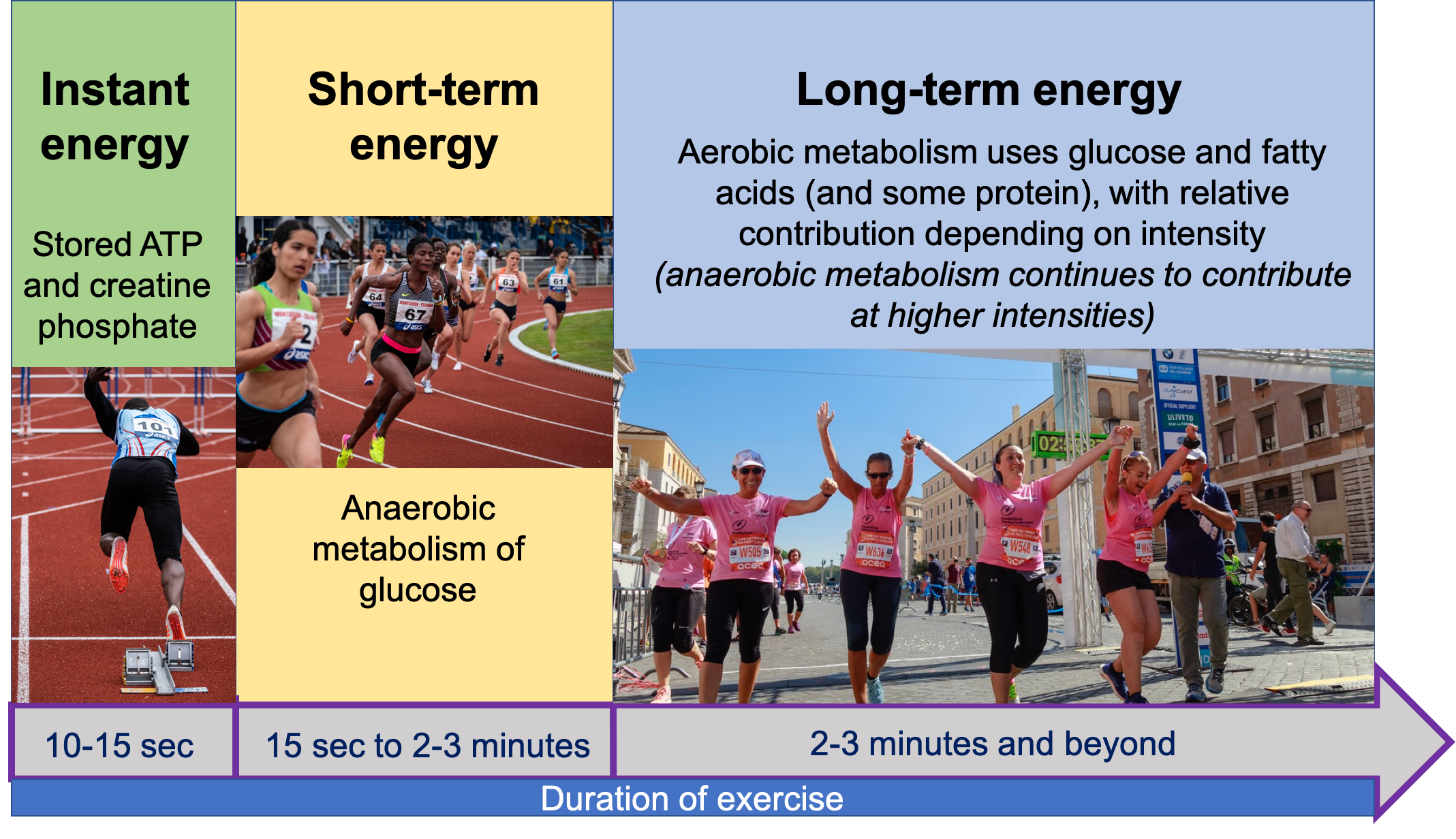 The image shows 3 main energy systems used to fuel exercise and how they change with duration of exercise. The left panel shows instant energy coming from stored ATP and creatine phosphate for the first 10-15 seconds of exercise, illustrated with a photo of a man leaving the starting blocks on a track. The middle panel shows short-term energy coming from anaerobic metabolism of glucose, fueling 15 seconds to 2-3 minutes of exercise, illustrated by a photo of women rounding the track during a race. The right panel shows long-term energy fueled by aerobic metabolism of glucose, fatty acids, and protein, with relative contribution depending on intensity and with anaerobic metabolism continuing to contribute at higher intensities. This panel is illustrated by a group of women crossing the finish line at a half marathon.